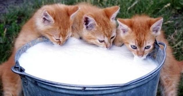 alimentation favoriser pour un chat
