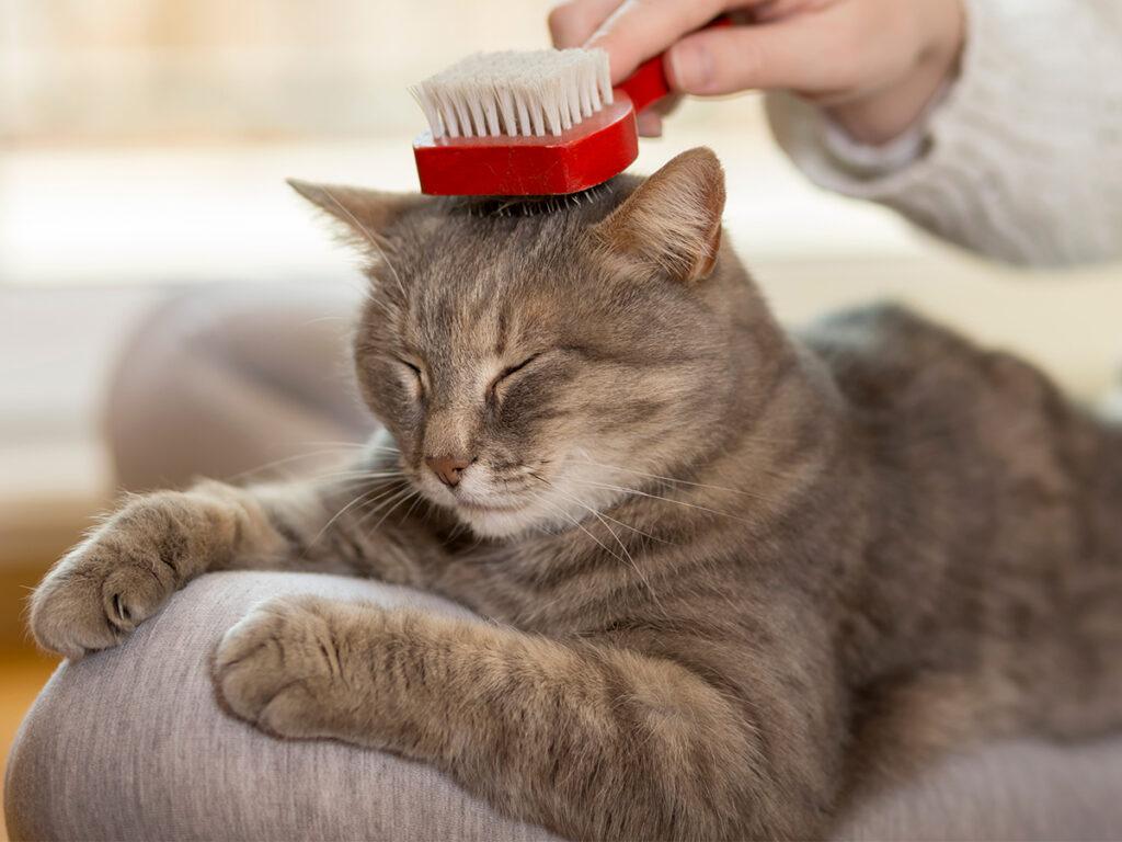 soigner son chat sans argent
