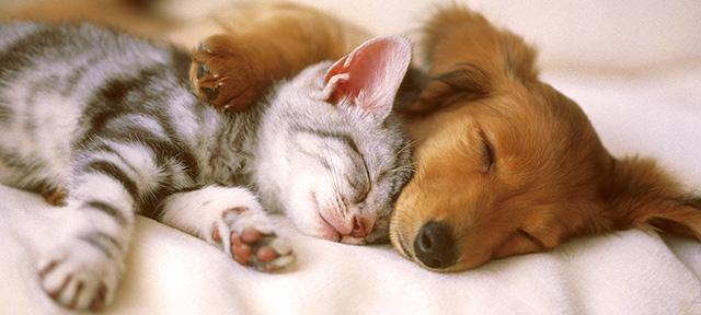 cohabitation-chien-chats