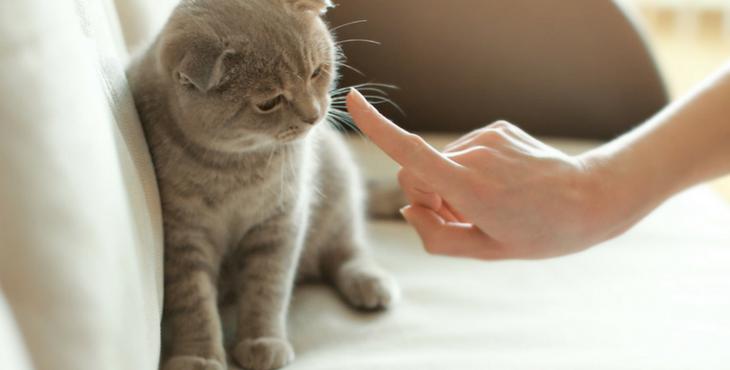 éduquer des chatons